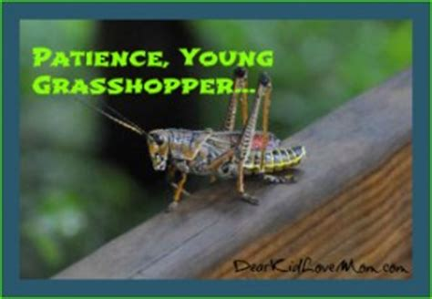 Famous Kung Fu Grasshopper Quotes