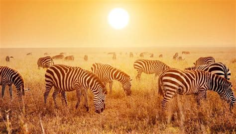The complete guide to Tanzania
