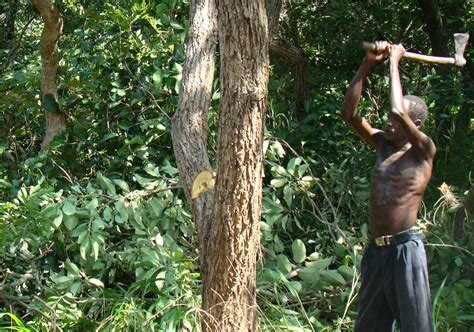 The New Humanitarian | Charcoal boom a bust for forests