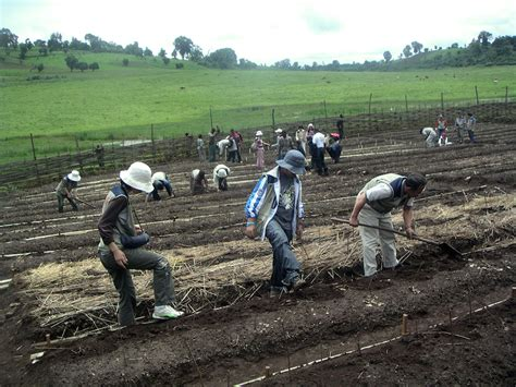 How low-tech Ethiopian environmentalism is saving the