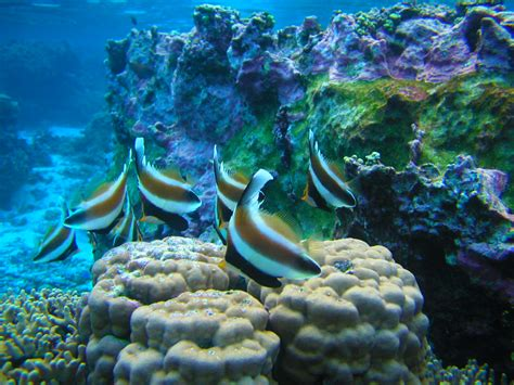 Snorkeling and Diving - National Park of American Samoa (U