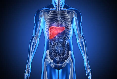 The food that saves you from liver cancer - Easy Health